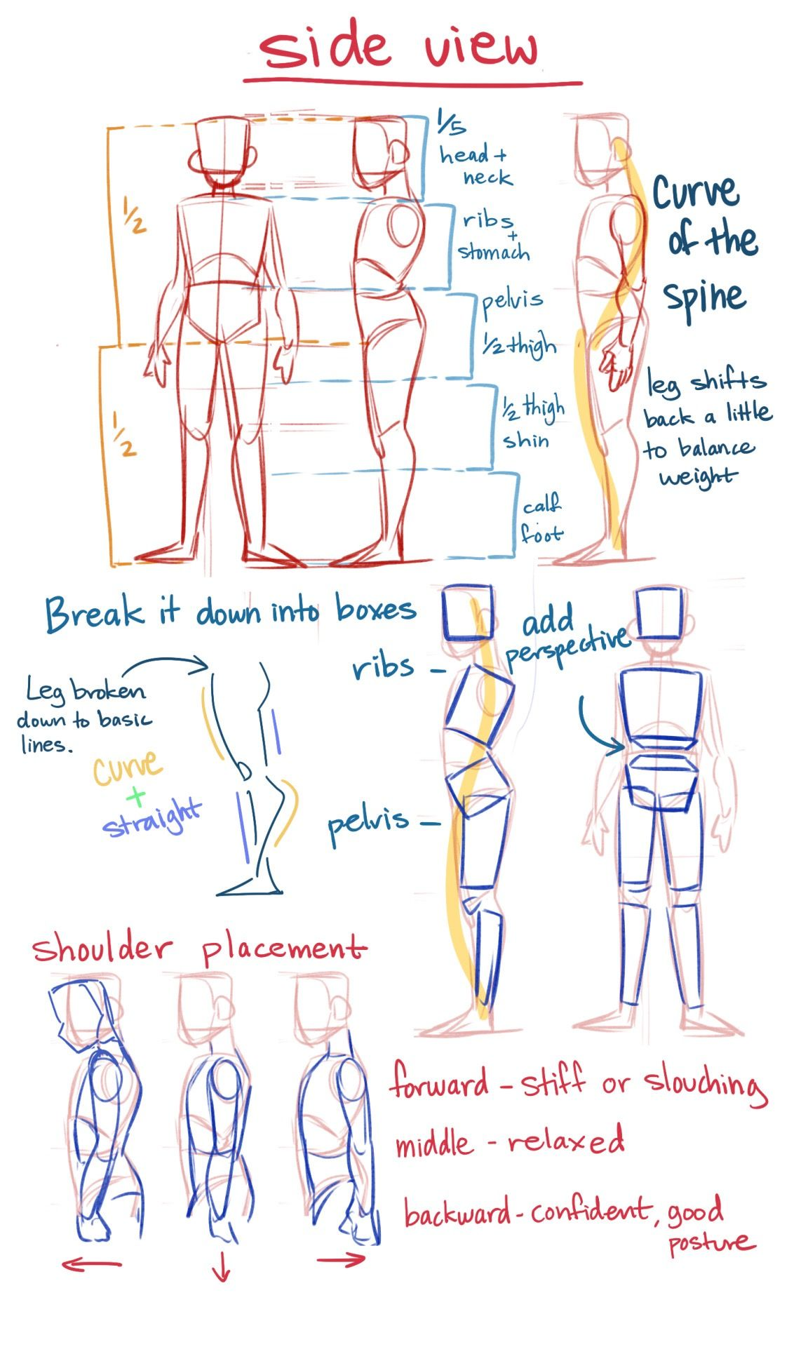 Basic anatomy cheat sheet by unknown with images