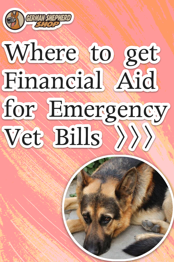Where To Get Financial Aid For Emergency Vet Bills Emergency Vet Veterinary Care Medical Prescription