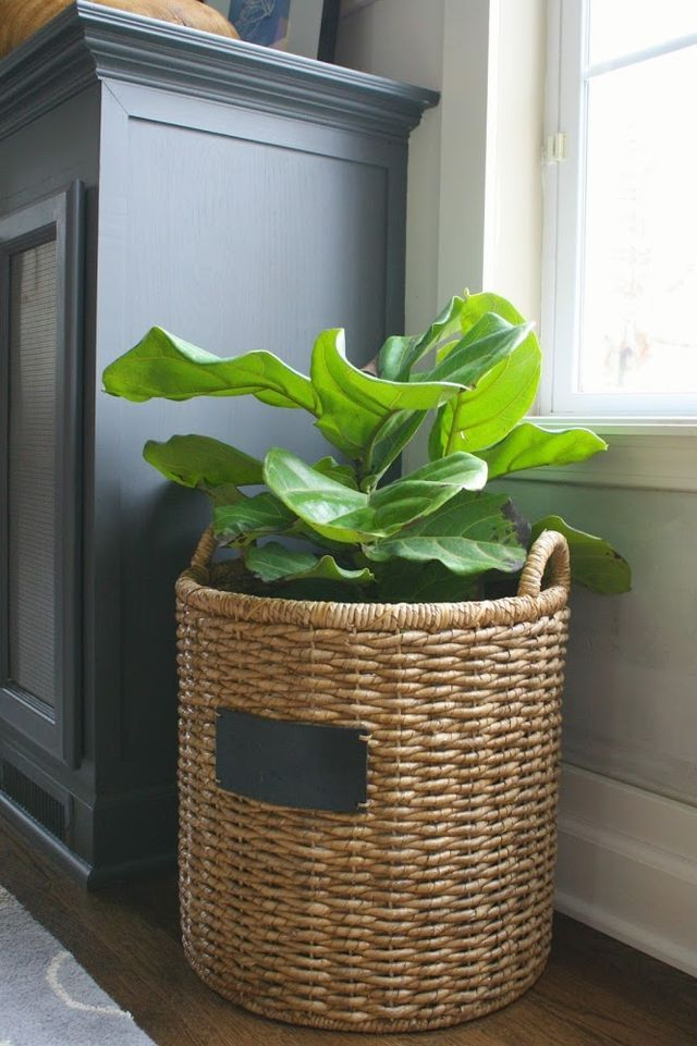 wicker chair accessory on Pin On House Plants