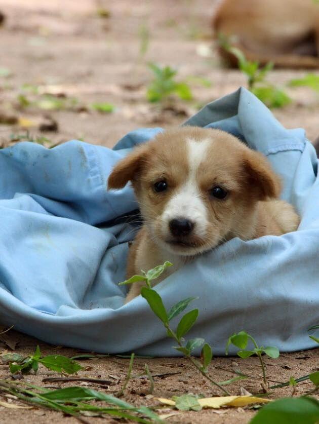 Embark Sri Lanka On Brand New Day Puppies Sri Lanka
