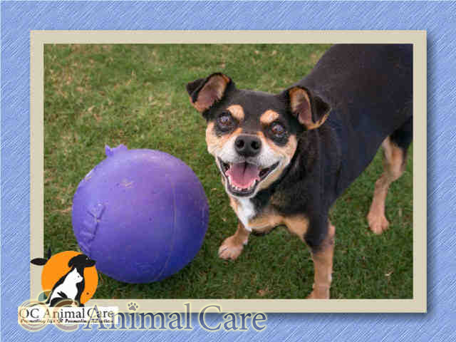 Pin by Wilson Automotive on OC Dogs to Adopt Dog