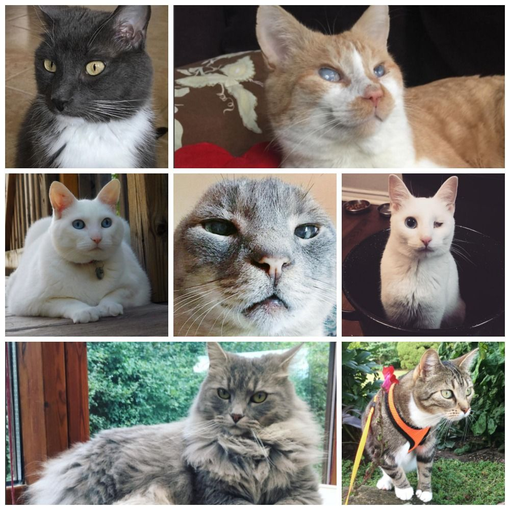 Which Deaf Cat Are You? Take This Quiz To Find Out Right
