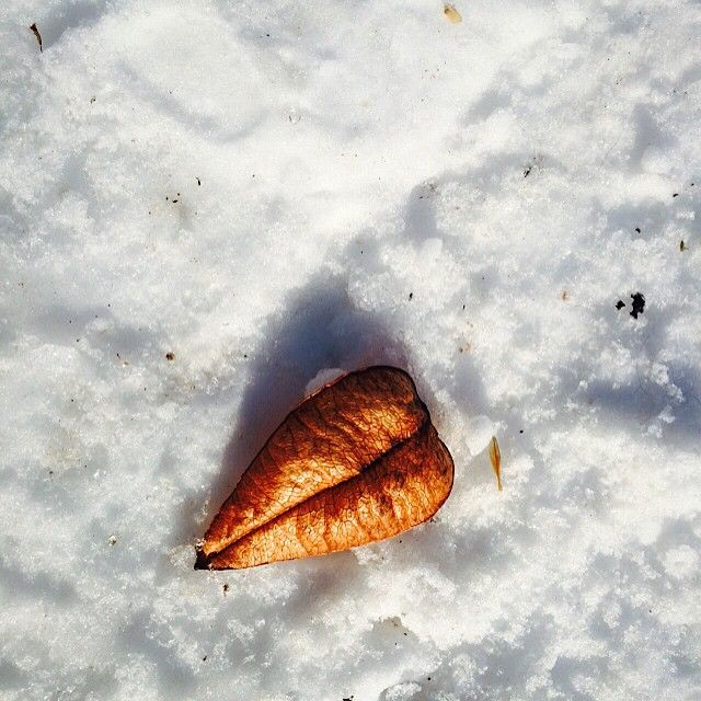 #WonderWatch 2015-18 Heart Leaf #Snow #LeafHeart