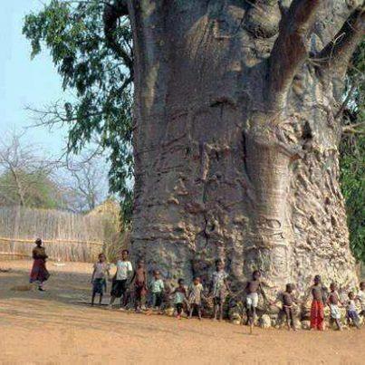 Baobab (tree of life) :)카지노주소카지노주소카지노주소카지노주소카지노주소카지노주소카지노주소카지노주소카지노주소카지노주소카지노주소카지노주소카지노주소카지노주소카지노주소카지노주소 카지노주소카지노주소카지노주소카지노주소 카지노주소카지노주소카지노주소카지노주소카지노주소카지노주소카지노주소카지노주소카지노주소카지노주소카지노주소