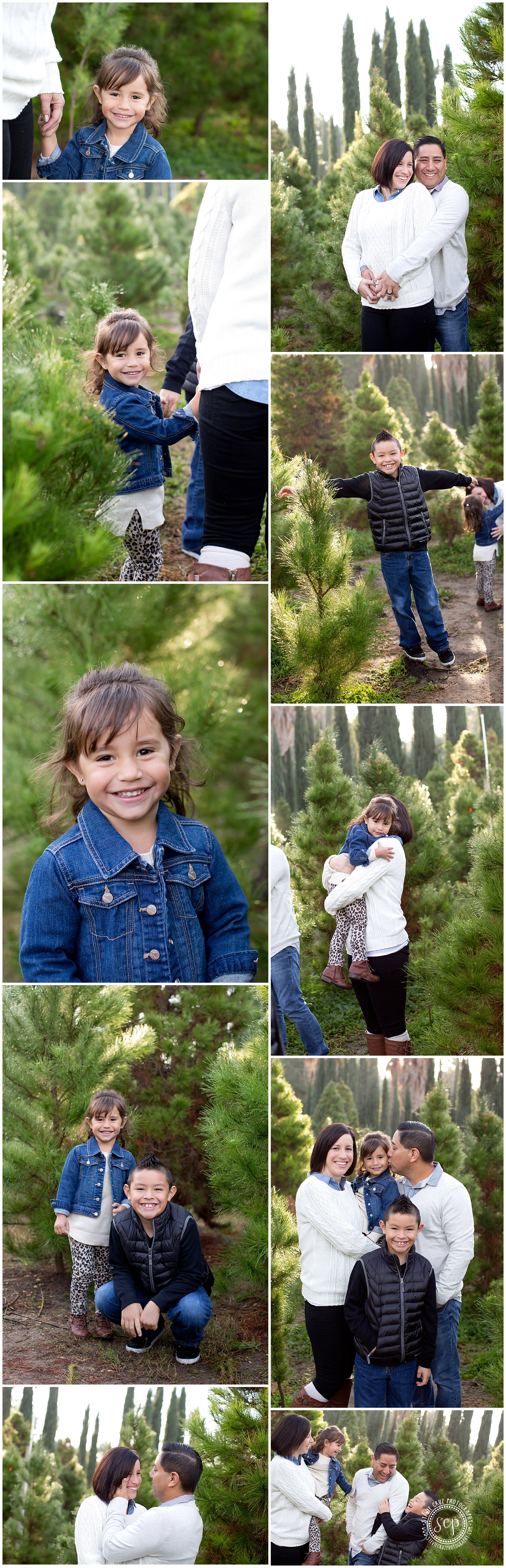 holiday family pictures in a tree farm in California. Blue, jeans ...