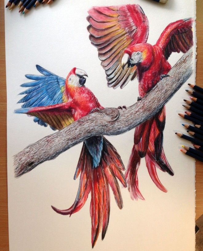 40 Beautiful Bird Drawings and Art works for your ...
