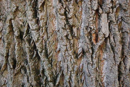 10 High Quality Free Tree Bark Textures Tree Bark Texture Tree Bark Tree Textures