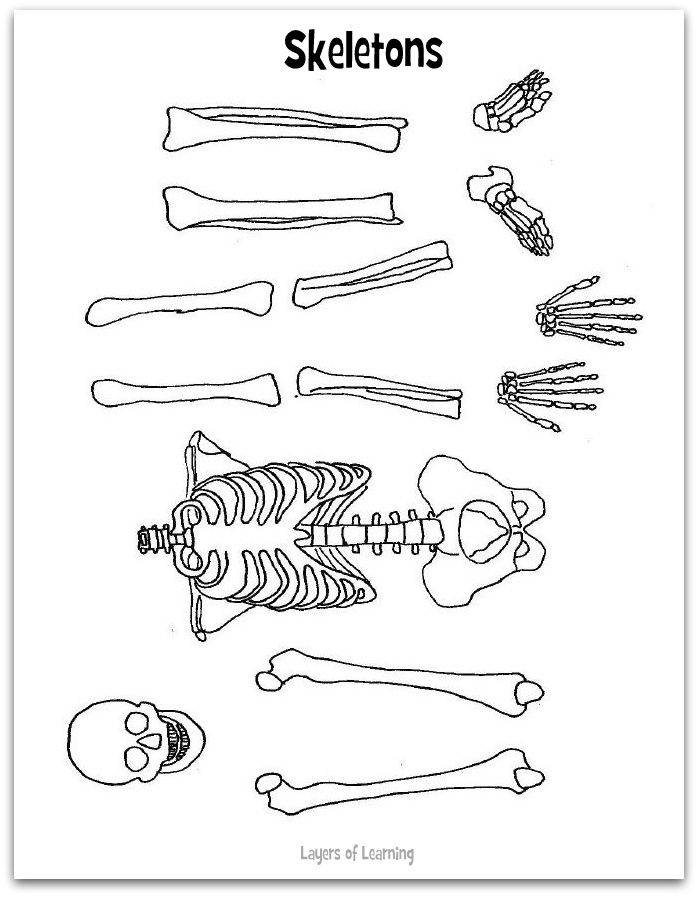 Skeleton Worksheet And Craft Human Body Skeletons And Bodies