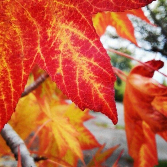 #autumn #colours #treviso #nostalgicmoment