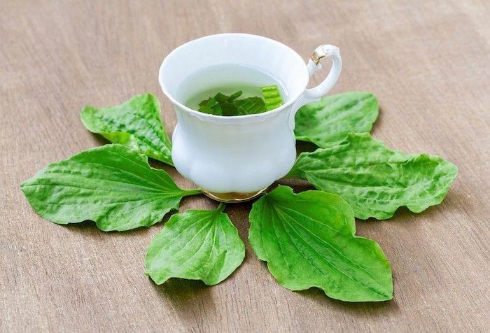 PLANTES Médicinales - Pour être bien dans son assiette | Plantain, Herboristerie et Anti ...