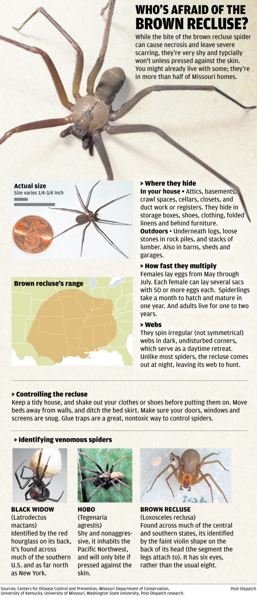 Graphic: All About The Brown Recluse Spider