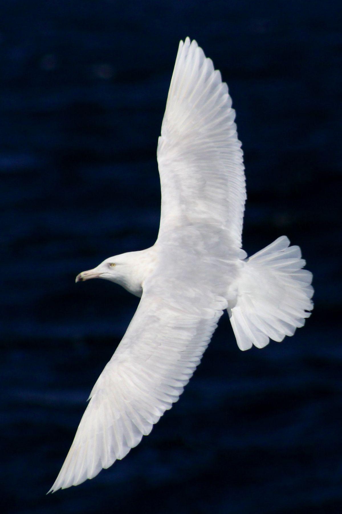 The White Birds By William Butler Yeats Sea Birds Bird Life List White Bird