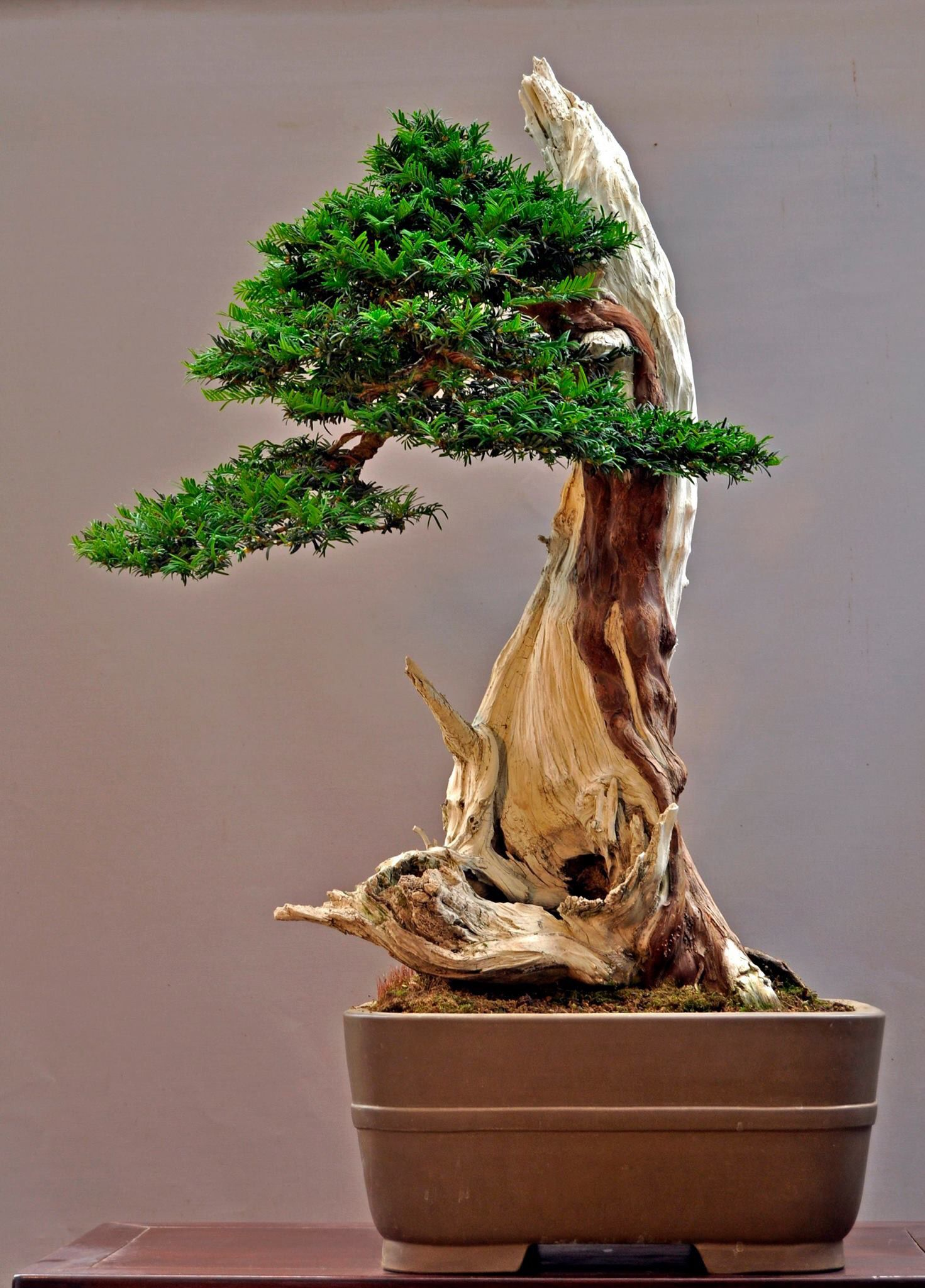 Pin By Chris D Costello On Smallest Forest Pinterest Bonsai Plants And Ikebana