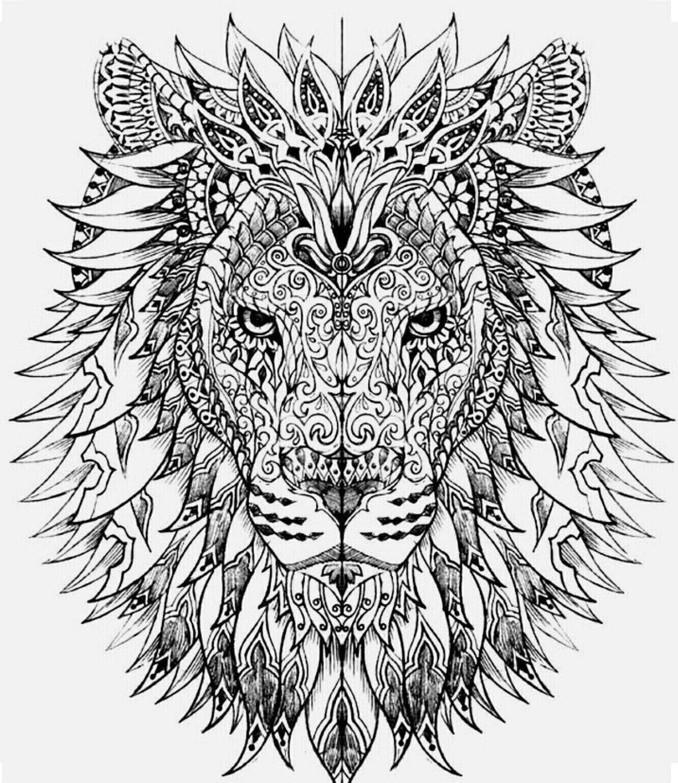 lion color page coloring book pages pinterest lions