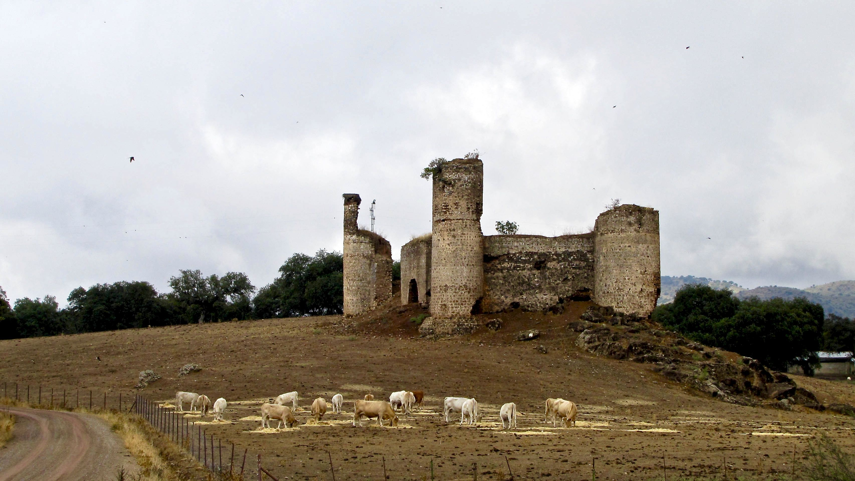 Sheep By Old Castle Near El Real De La Jara Via De La Plata Camino
