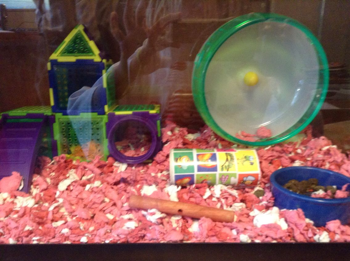Awesome Hamster House You Can Buy It At A Local Petco Near You Hamster House Hamster Petco