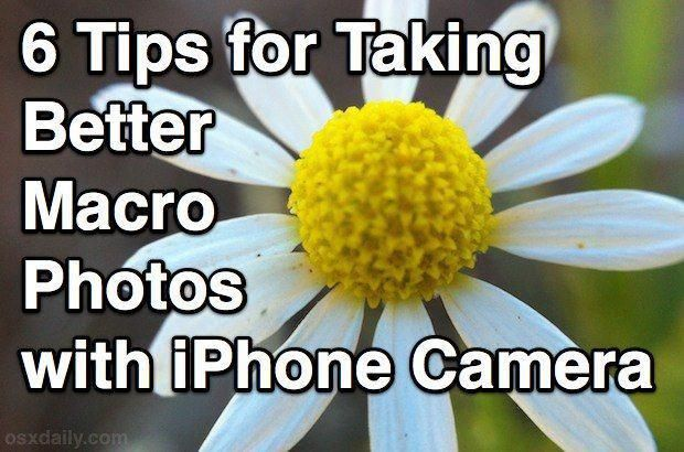 6 Tips For Taking Better Macro Photos With The IPhone