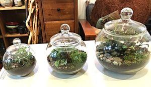 "Stop Calling Every Glass Planter a ""Terrarium""  [Blog Post]"
