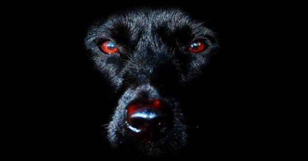 10 Fantastic Black Dog Stories From England