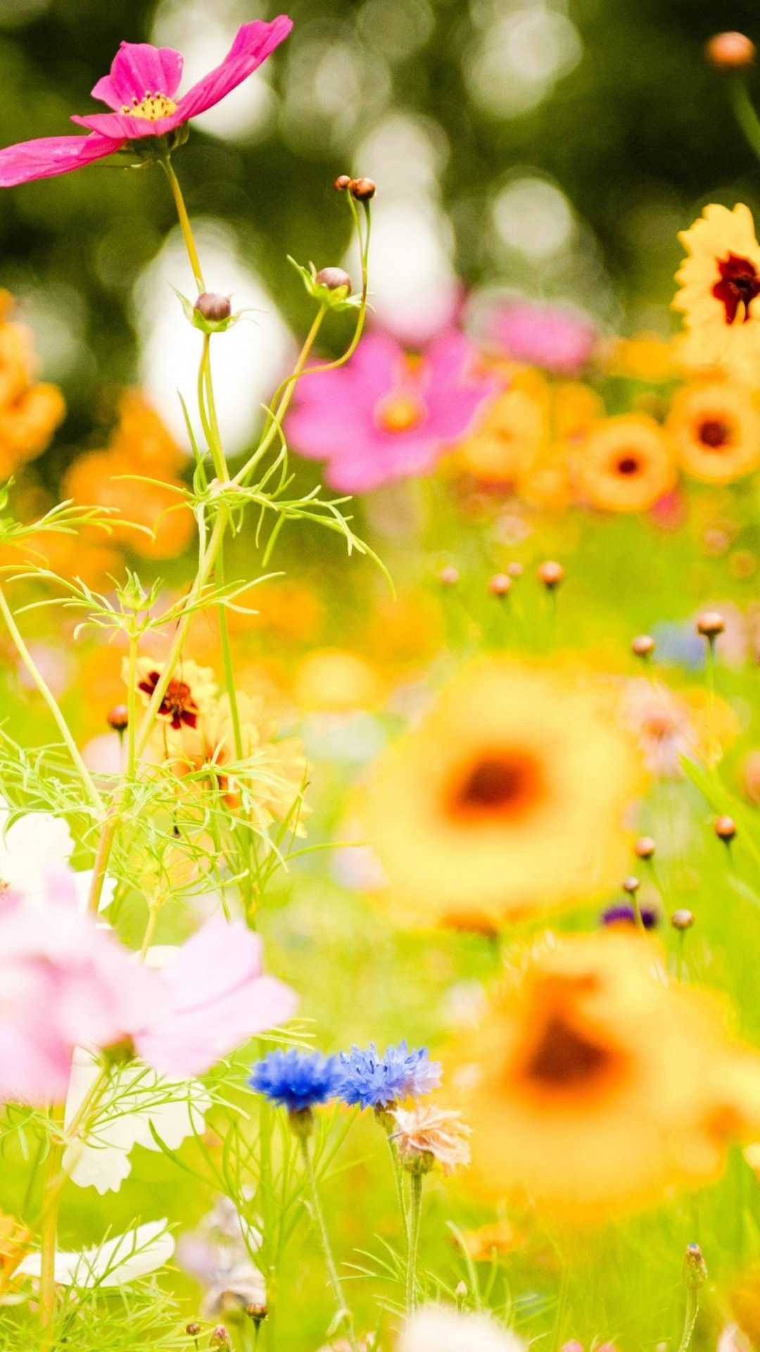 Flower Pictures iPhone 6 Plus Wallpaper 17025 Flowers