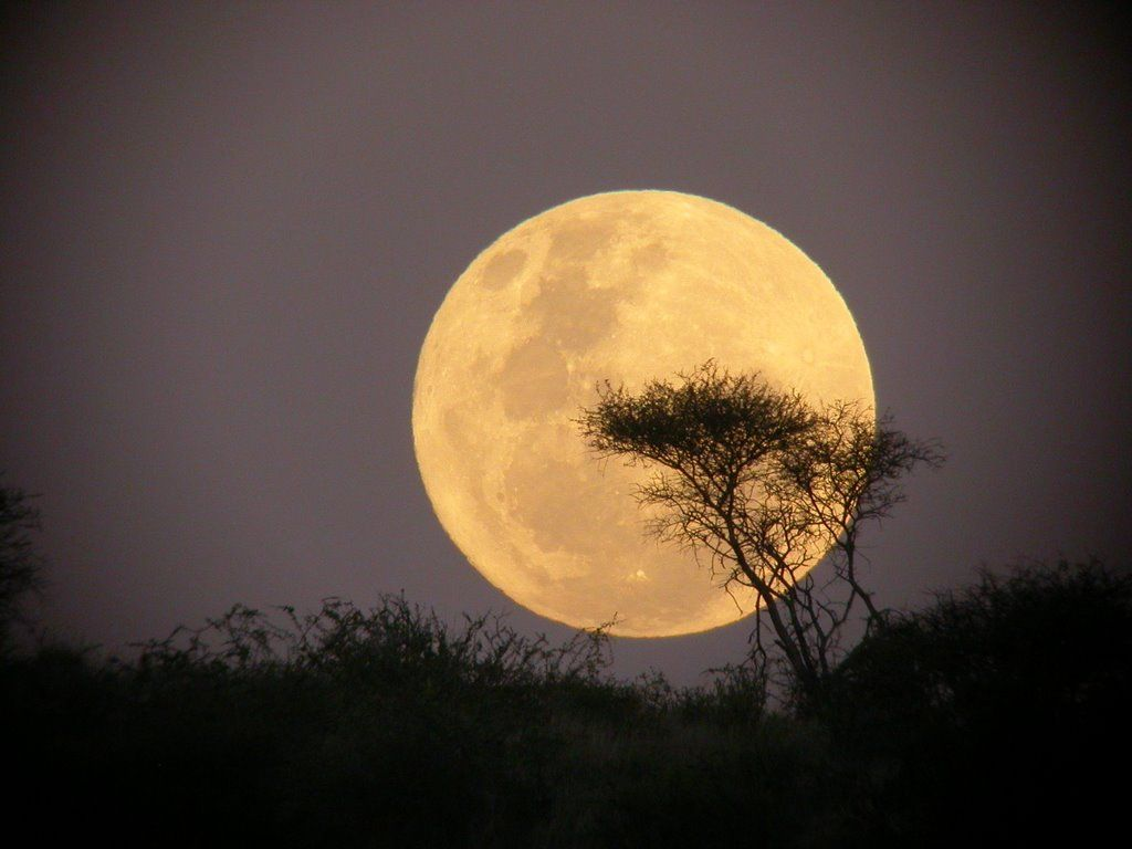 Quotes About Full Moon Beautiful Full Moon Quotes  Google Search  Krish  Pinterest