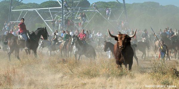 Spanish Politicians: Ban Cruel Bull Fiestas