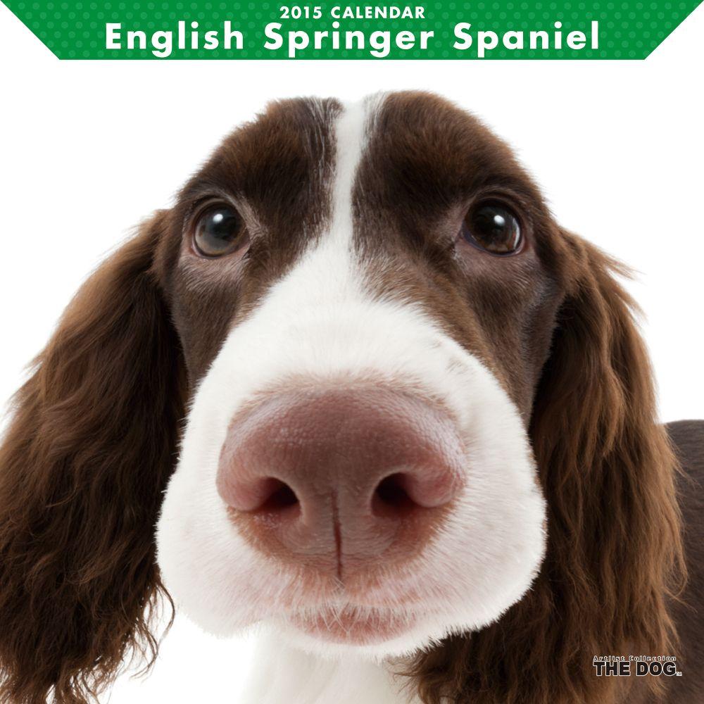 Springer Spaniel DOG Artlist Collection CALENDAR 2015