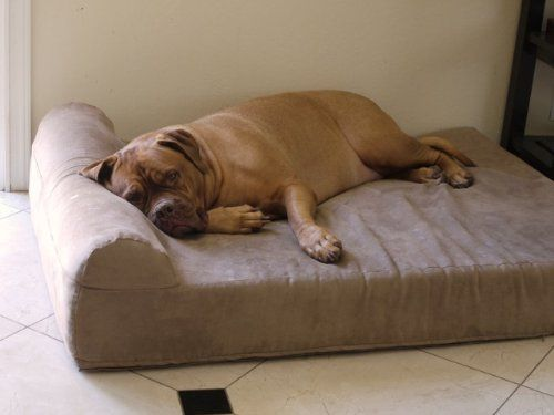 5 Best Dog Beds For Senior Arthritic Dogs Cool Dog Beds Big Dog Beds Dog Bed