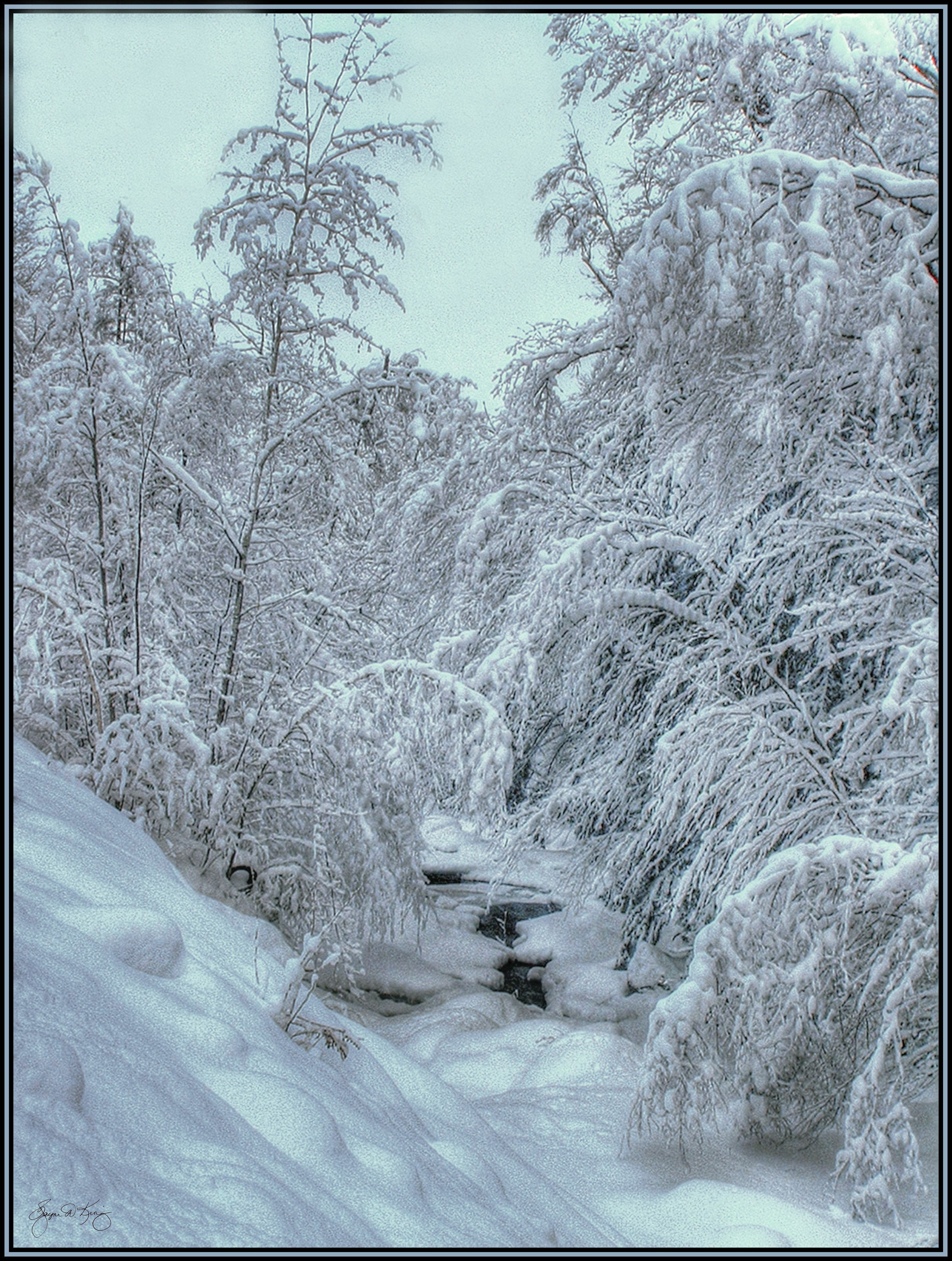 Into White New Snow Blankets Hall S Brook In Groton Nh