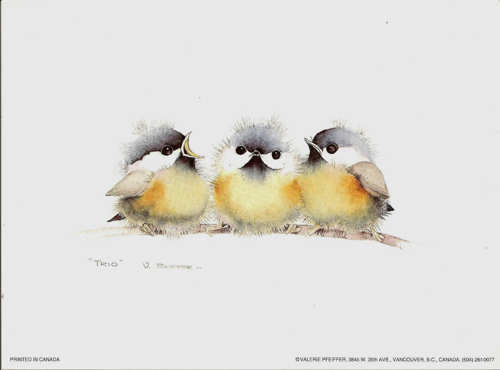 Trio By Valerie Pfeiffer Watercolor Bird Bird Drawings