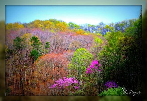 The Mountains Of Eastern Ky Pikeville Photo Album Topix My Old Kentucky Home Appalachia Pikeville