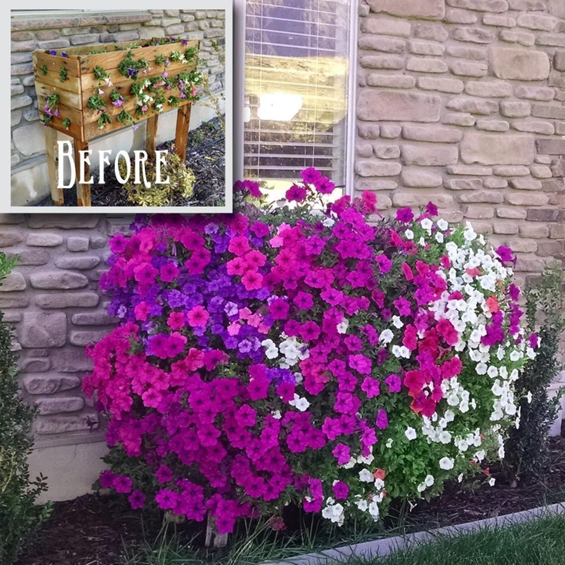 32 Beautiful Ideas Cascading Flowers For Window Boxes Cascading