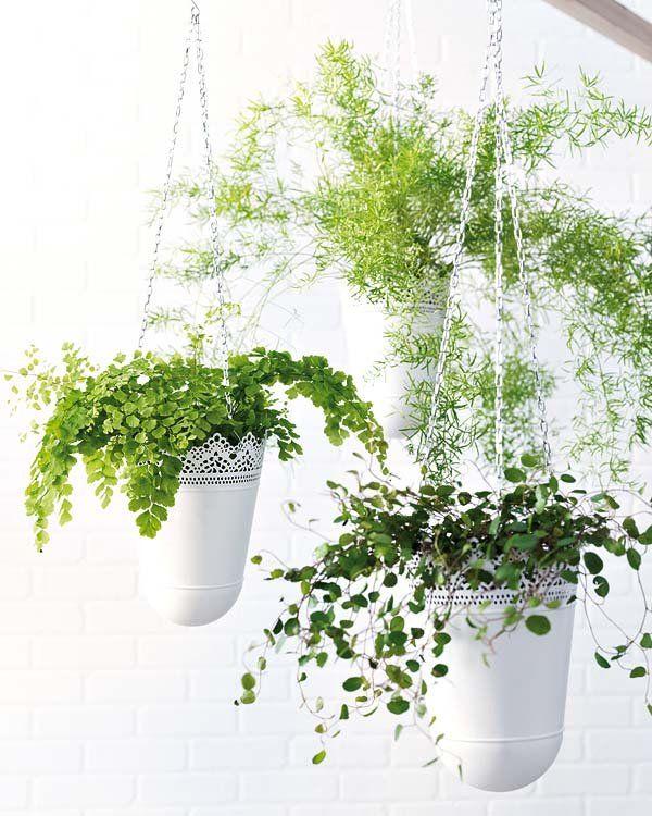 Vida al aire libre las flores en verano restaurantes - Plantas colgantes interior ...