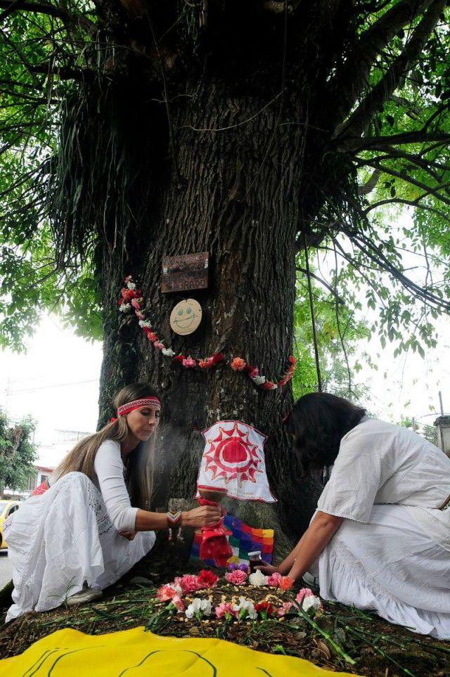 Tutela y ritual para salvar a los urapanes de Milán | La Patria