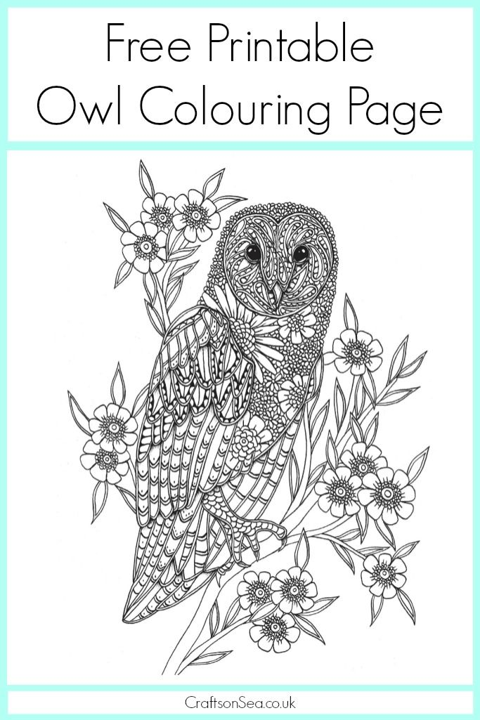 Free Owl Colouring Page Owl Coloring Pages Coloring Pages Free