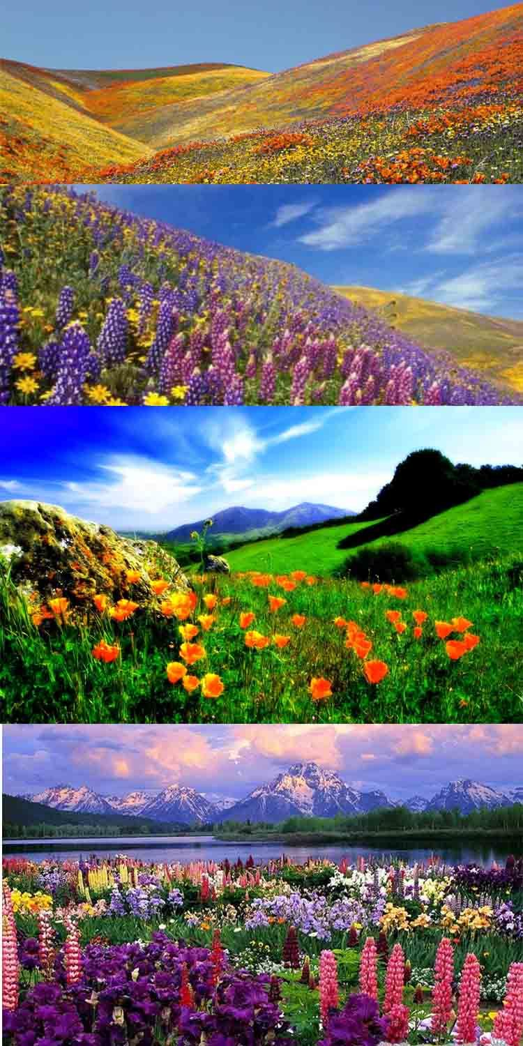 Valley of Flowers is a vibrant and splendid national park
