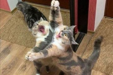 Hilarious Cute Animal Pictures For Your Enjoyment