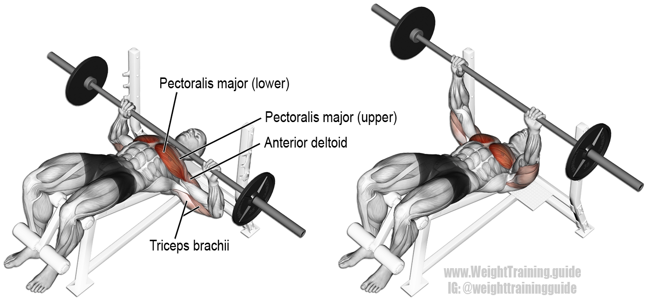 Decline Barbell Bench Press Guide And Video Weight Training Guide Chest Workouts Bench Press Best Chest Workout