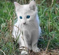 albino animals - Google Search,  #Albino #albinoanimalangel #animals #Google #Search #albinoanimals