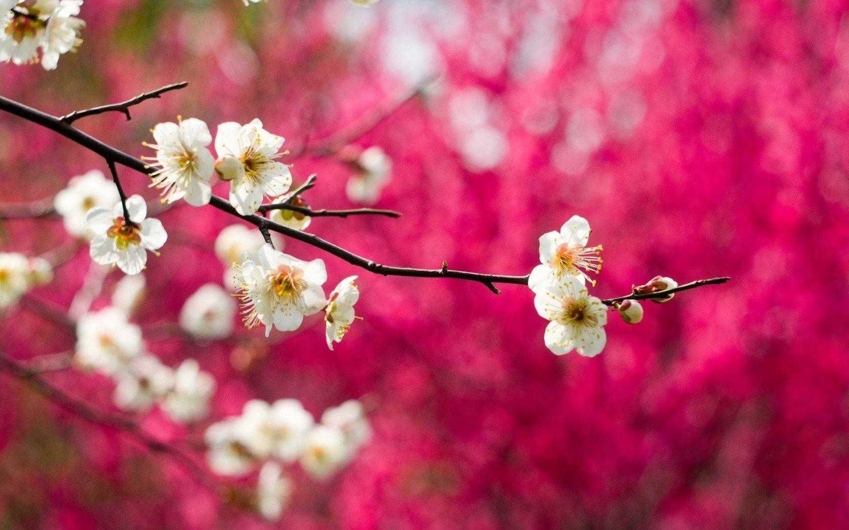 Spring Bahar Cicek Resim