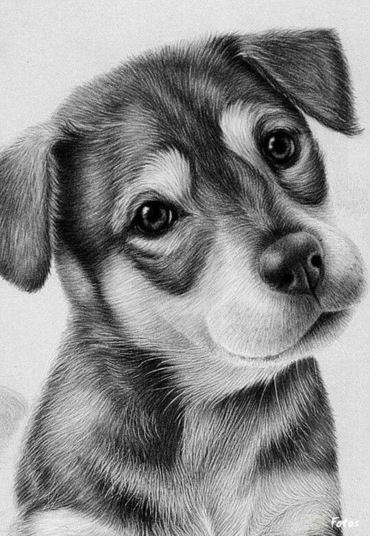 Cute Puppy Drawing With Images Realistic Drawings Animal