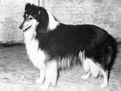 Collieonline
