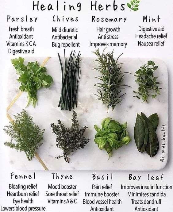 Natural healing using herbs — Steemit