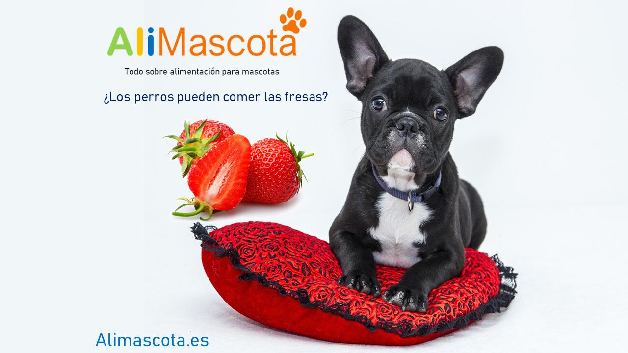 Los Perros Pueden Comer Fresas Perros Fresas Alimentos Para Mascotas