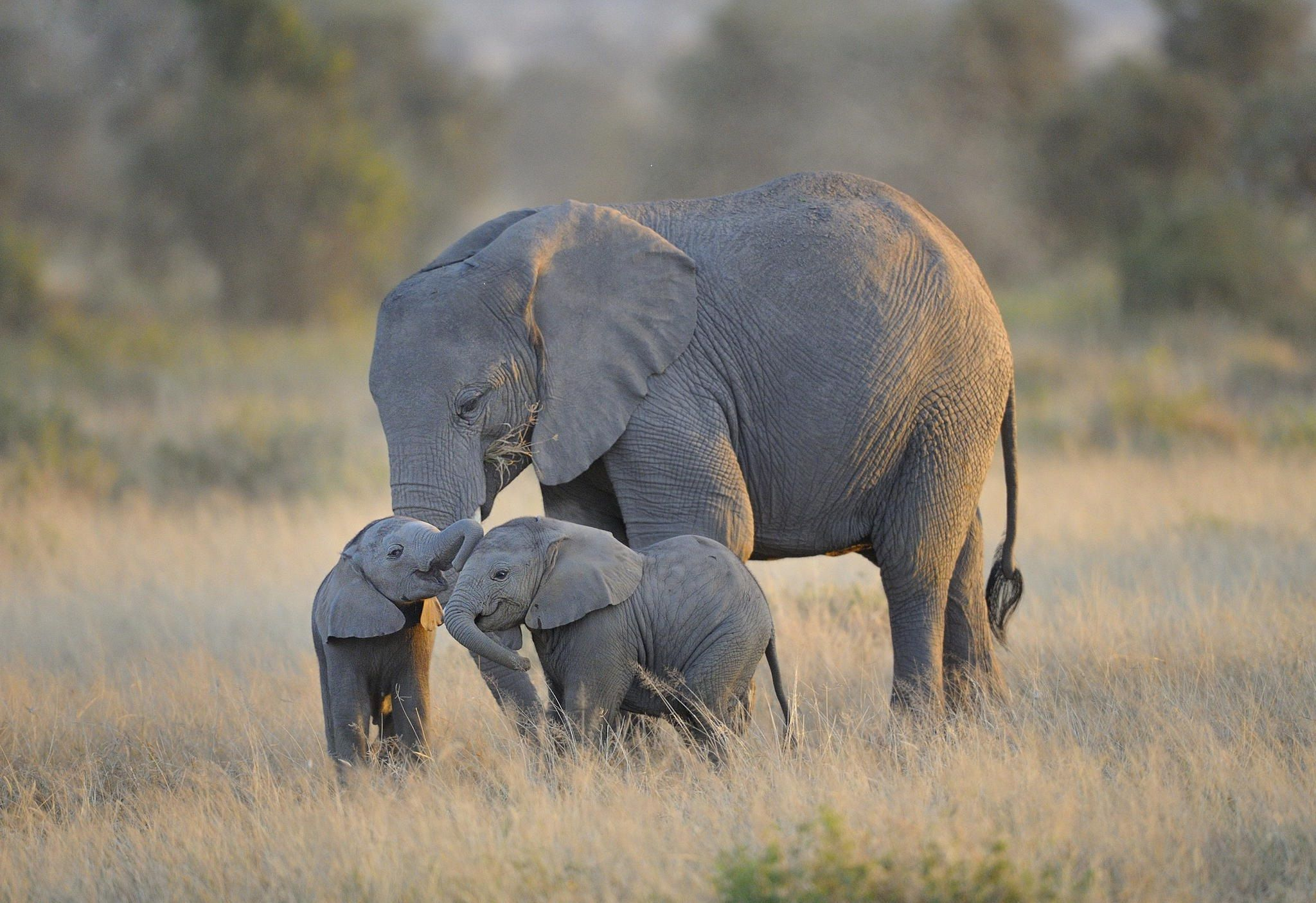 Baby Elephant And Mother Wallpapers High Resolution Animals Elephants Photos Baby Elephant Elephant Pictures