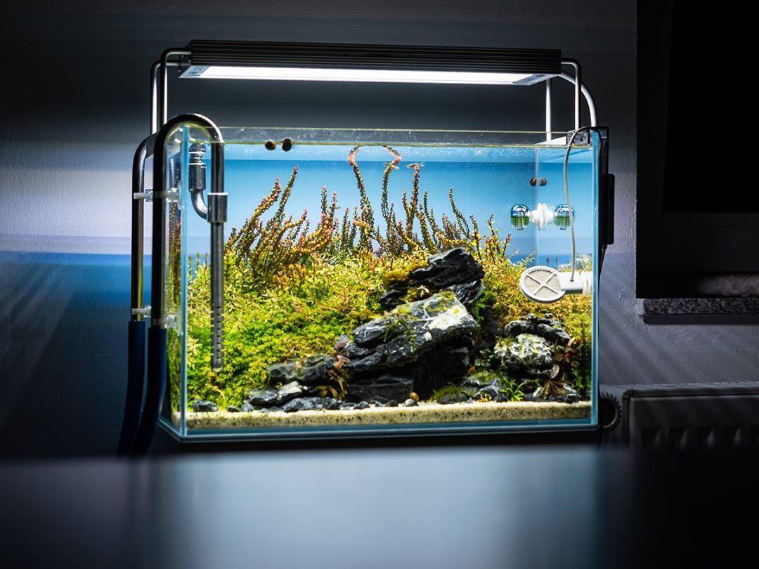 Werbung Die Neue Solid Ls Wrgb Beleuchtung Von Aquagrowled Das Hier Ist Die Solid Ls 370 Die 4 300lm Liefert Die Solid Ls Ist Nicht Der Na Scp Aquarium