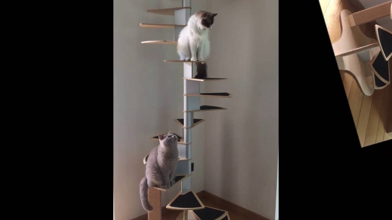 Best Woozi Cat Spiral Stair 400 x 300