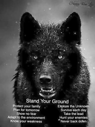 Pin By Lavender Moon On Words Wolf Quotes Quotes Life Quotes