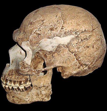 Yacimientos de Skhul y Qafzeh - Wikipedia, la enciclopedia libre ...