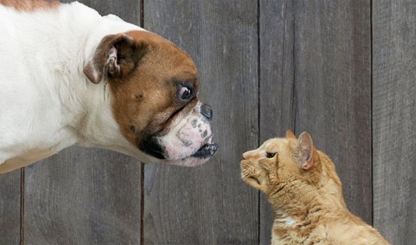 Cats Vs Dogs Who Rules The Internet Cat Vs Dog Dog Cat